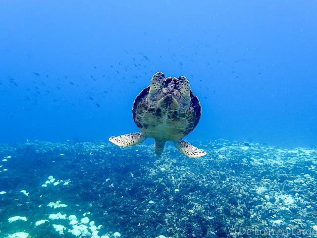 Tortue - Gili Meno - Lombok Bali