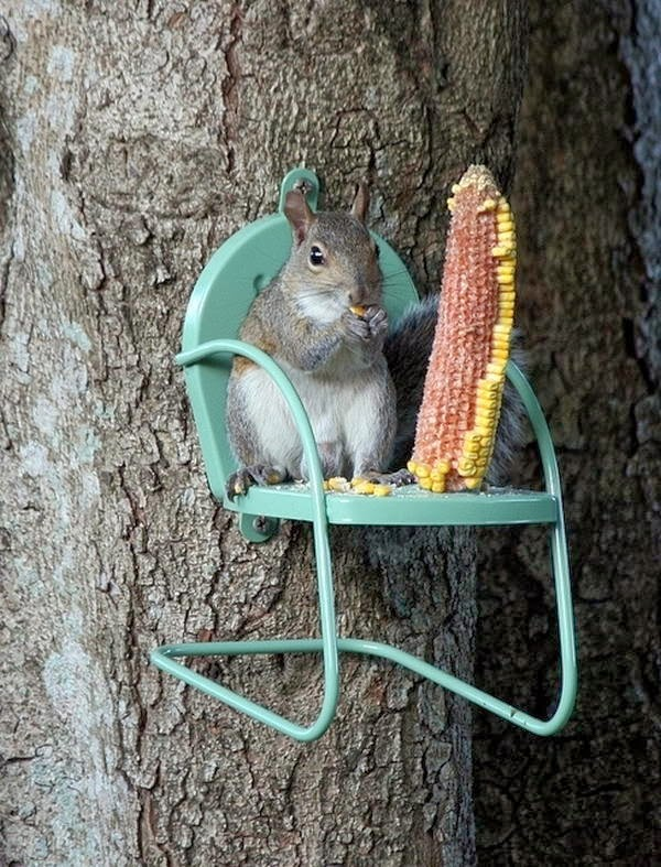 Funny animals of the week - 14 February 2014 (40 pics), squirrel eats corn in a tree