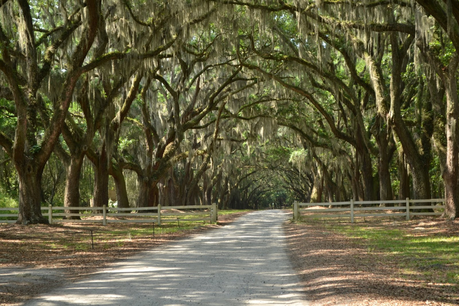 Плантация Вормсло, Cаванна, Джорджия (Wormsloe Historic Site, Savannah, GA)