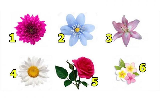 Выбранный цветок раскроет тайны вашей женской привлекательности!