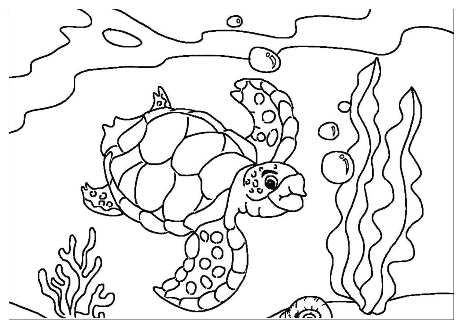 Tranh cho bé tô màu con rùa dưới đại dương