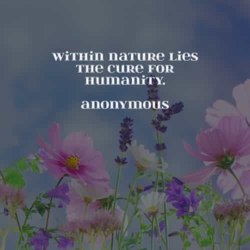 Nature quotes and sayings that gives inspiration