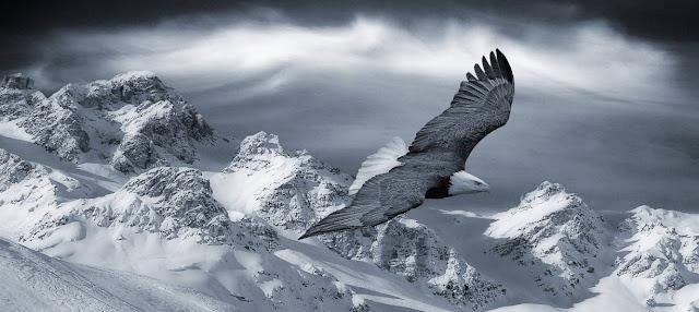 Aves e hipoxia
