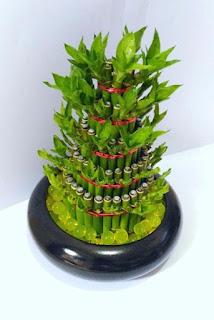 bambu-hoki