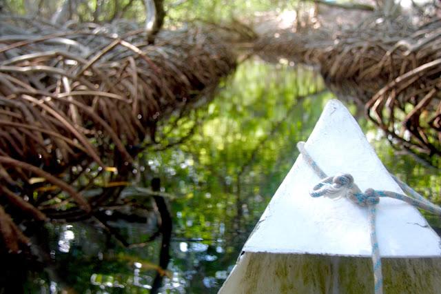 Passeio de canoa entre os túneis de mangue, nas lagunas da Isla Grande, no CAribe Colombiano.