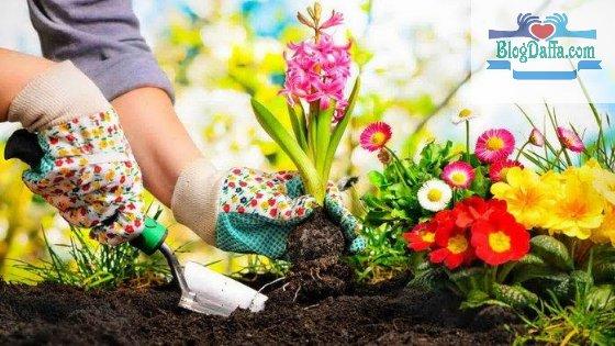 Cara Merawat Bunga di Halaman Rumah