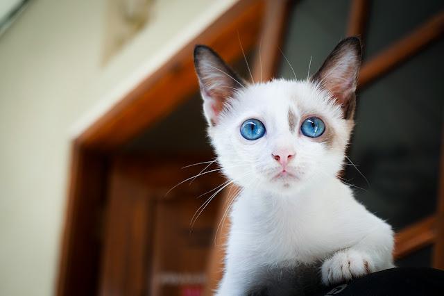أفضل اسماء قطط لسنة 2019 ، اسماء قطط تركى