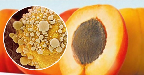The Most Powerful Anti-Cancer Kernel Known On Planet Earth According to This Doctor