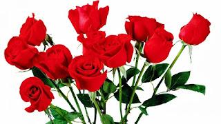 Gambar Bunga Mawar Merah Yang Cantik_Red Roses Flower 2004