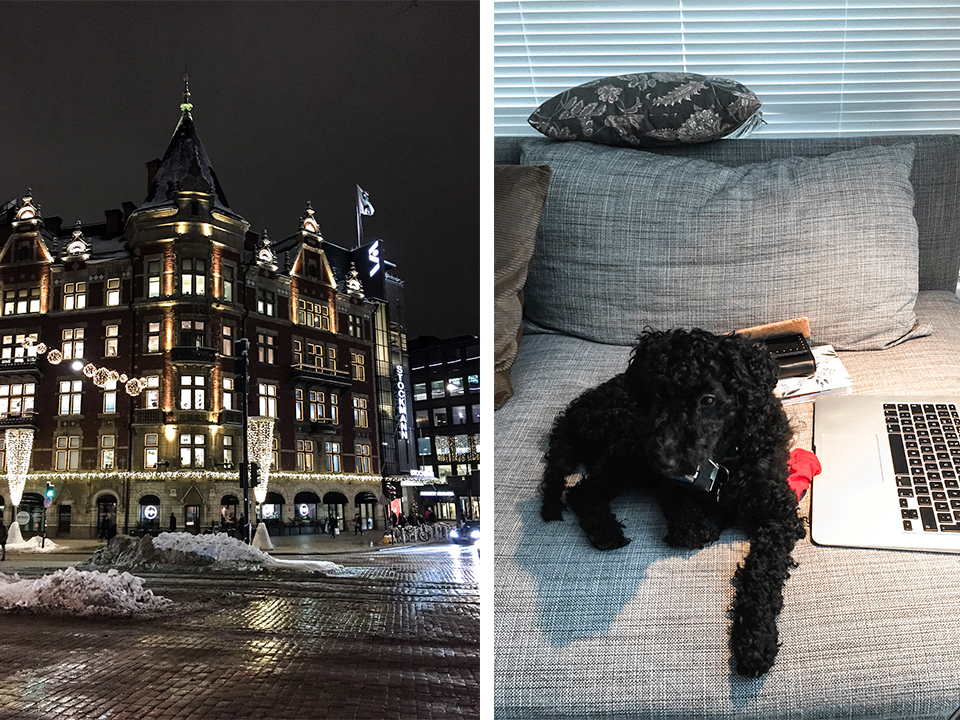 stockmann-christmas-lights-mini-poodle