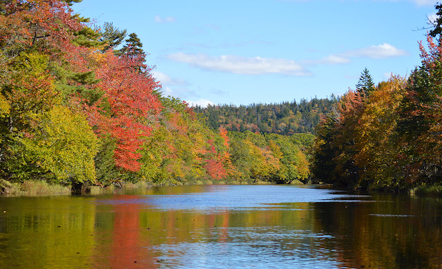 Musquodoboit River in Fall