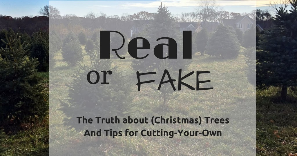 Katie Wanders : Real or Fake? The truth about Christmas Trees