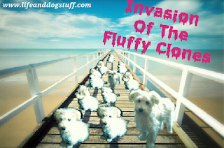 invasion of the Fluffy clones.