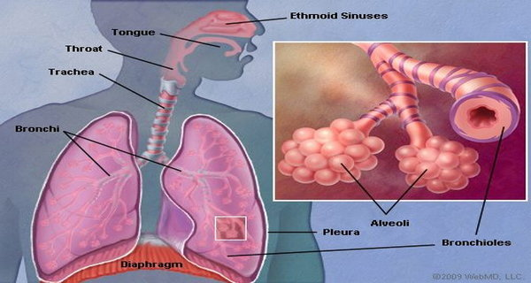 How To Clean The Lungs In Just 3 days