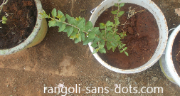 home-garden-marudhani-plani.png