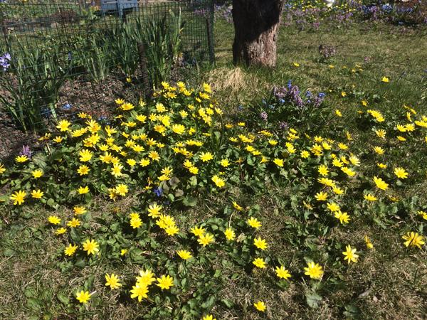 keväthuumaa
