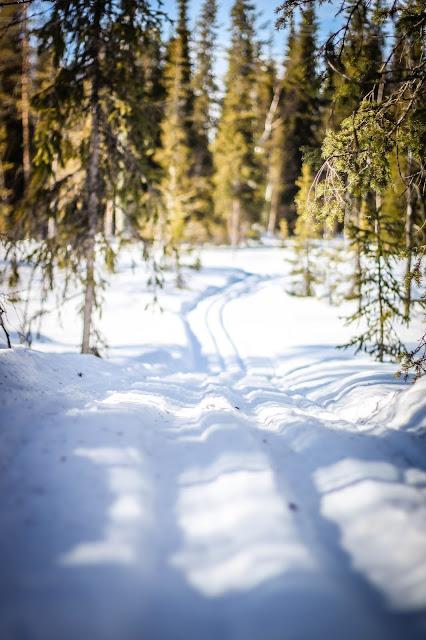 lappi lunta talvi
