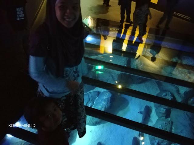 harga tiket masuk sea aquarium