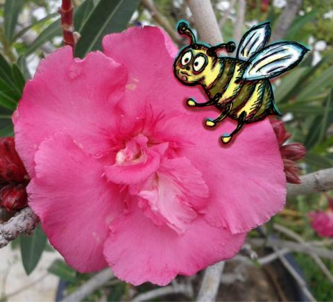 Illusztráció gyerekvershez, kerek potrohú, kék szárnyú, nehéz és gömbölyded méhecske ül virágporban virágon, fénysebességgel repüléshez készülődve.