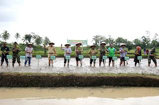Kepala Pelatihan Pusat Kementerian Pertanian RI Dr. Ir. Widi Harjono, MSC, Tanam Padi Bersama Di Tanah Datar