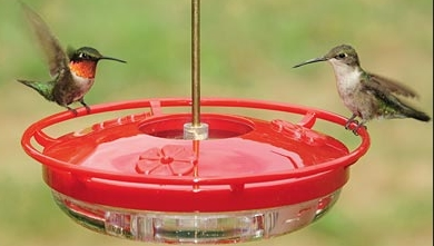 Wild Birds Unlimited How To Keep Ants Off The Hummingbird