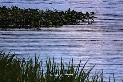 日本の風景 猪苗代湖 福島県