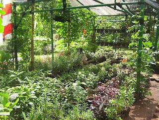 Pupuk Npk Untuk Tanaman Cabe Dosis Pupuk Untuk Kocor Cabe Gerbang Pertanian Menentukan Jenis Tanaman Pilihlah Jenis Tanaman Yang Bermanfaat Bagi