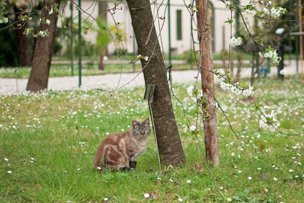 Petit chat aux yeux bleus sous un arbre au jardin des simples de Florence