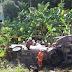 Maut 4WD Bertembung Treler