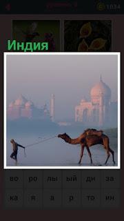 651 слов в дымке и на фоне верблюда с погонщиком Индия 8 уровень