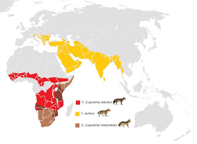 mapa rozporzestrzenienia się szakali, trzy gatunki pustynia europa, afryka