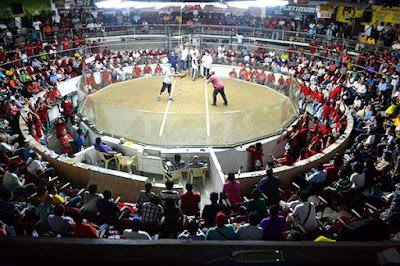 Arena Sabung Ayam S128