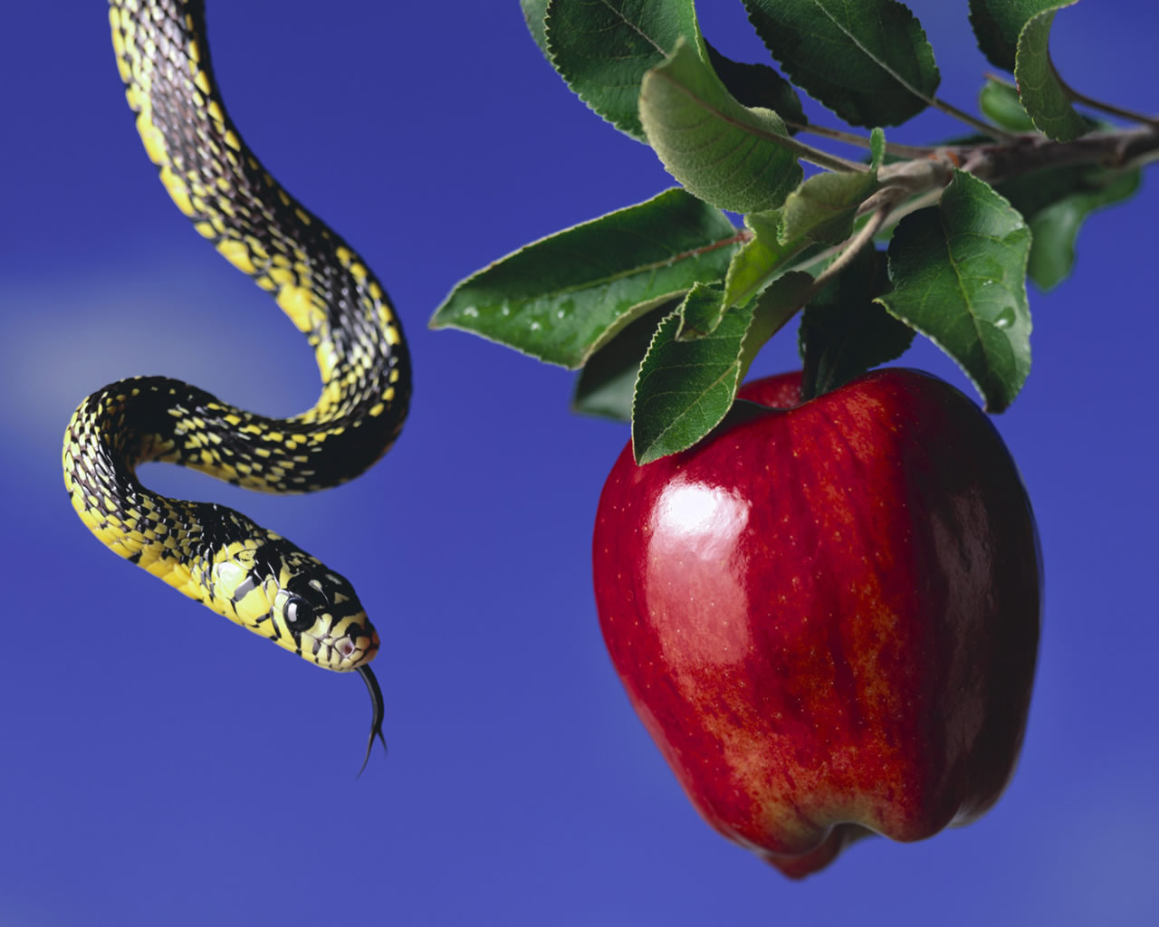 Defend Jehovah's Witnesses: How Could the Snake in the ...