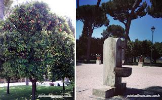 laranjeira jardim das laranjeiras roma - Jardim das Laranjeiras