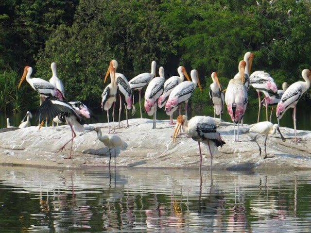 Kokkare-Bellur-Bird-Sanctuary-Bangalore