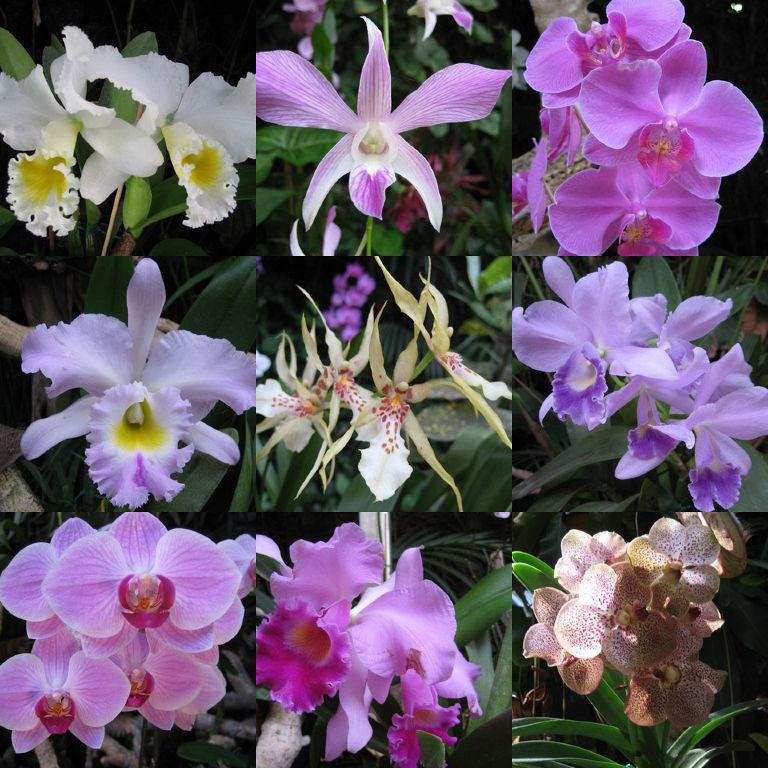 garten impressionen tropische falter und orchideen gegen. Black Bedroom Furniture Sets. Home Design Ideas