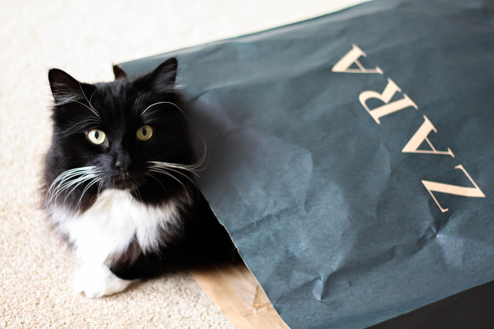 cat in a paper bag Zara