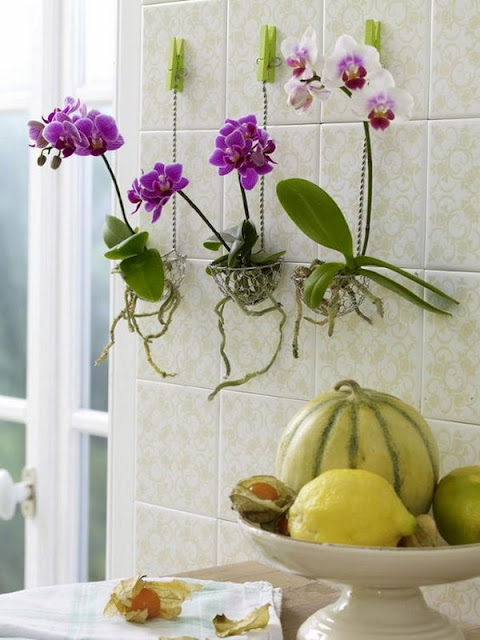 Decorate Your Interior With Orchids 2