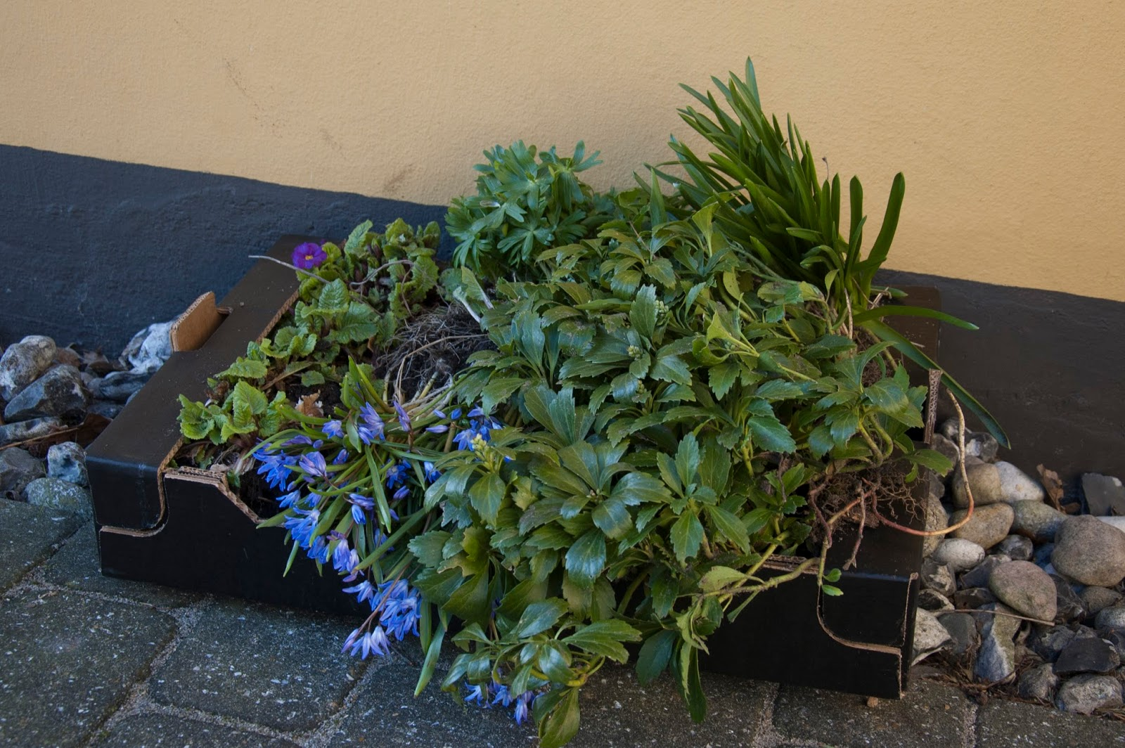 Mit grønne univers: Nye planter og blomster i krukker.