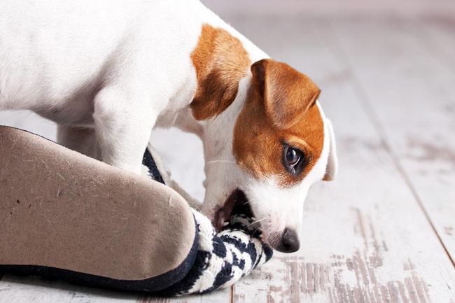 Jak skutecznie oduczyć psa gryzienia butów?