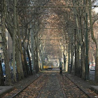 milan tree-lined tram tracks sempione via cenisio