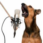 Contrôler les aboiements excessifs du chien