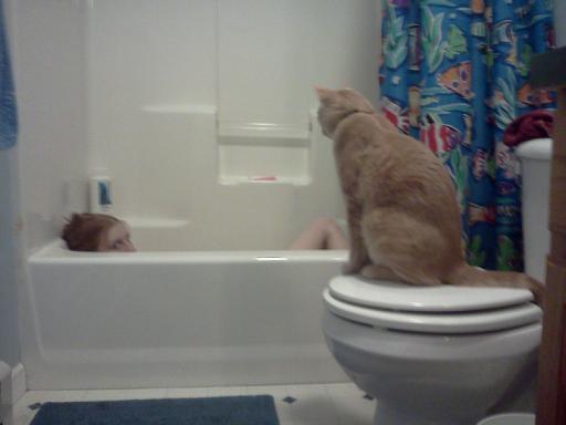 perv cat