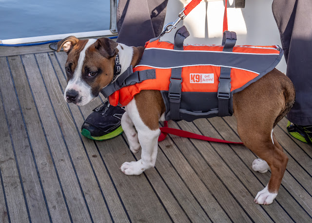 Photo of Ruby in her life jacket on our most recent fishing trip