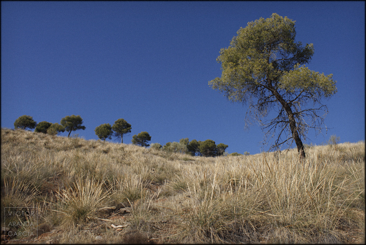 fotografia,granada,naturaleza,paisaje,arboles,monte