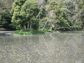鶴岡八幡宮源平池