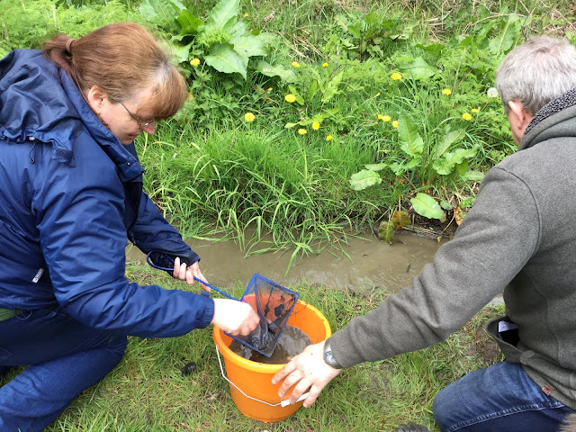Sandra and David rescuing tadpoles