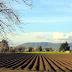 Lukavac: Javni poziv za podsticaje u poljoprivredi