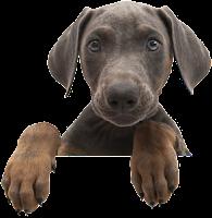 Cachorro debruçado png