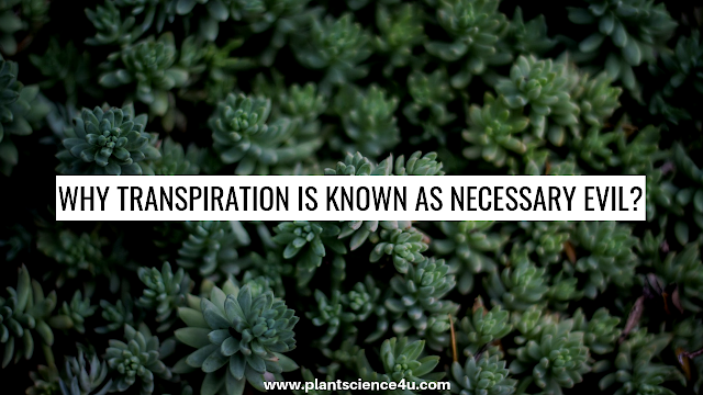 Why Transpiration is known as Necessary Evil?